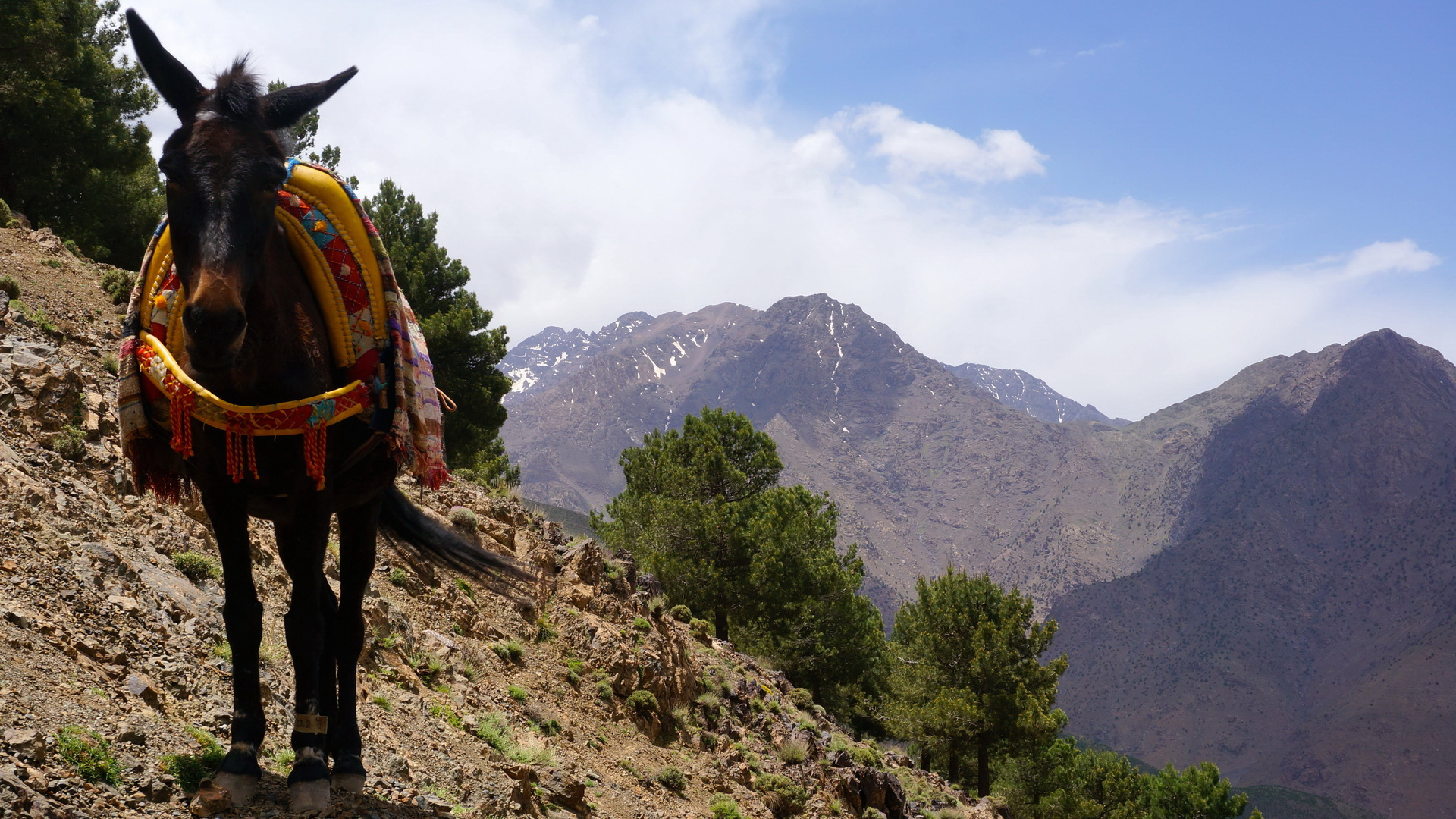 pathfinders treks - 3 days hiking in morocco atlas mountains - three berber valleys